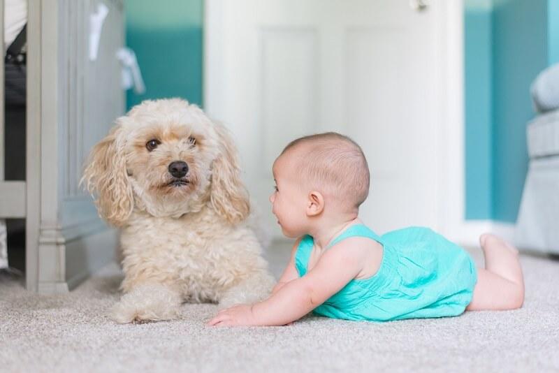 Chiot avec bébé et aspirateur nasal