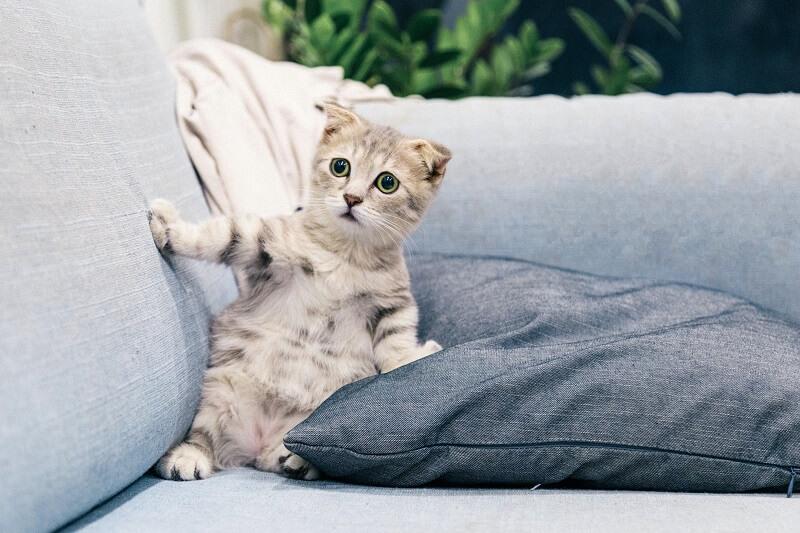 un chat posé sur un cousin