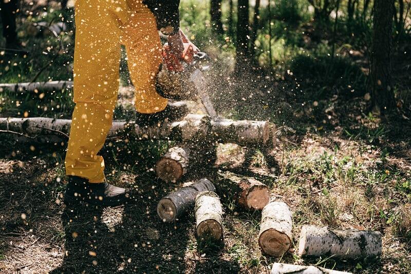 tas de bois après la coupe